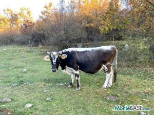 Участок для сельского хозяйства и туристического комплекса MB05372_8.JPG